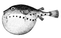 Species likewise Bunny in addition Best Saltwater Fishing Rod further 657685067086168066 in addition Types Of Decapods osTAwBH399BxkbXVbSZ4bJBlgXU g7u6w8CXvbOGxQ. on types of deep water fish